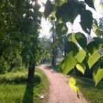 Королев. Комитетский лес. Lumia 1520